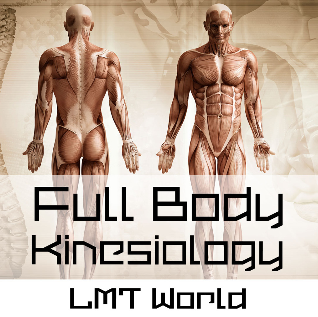 Full Body Kinesiology Audio Study Guide