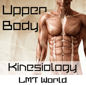 Upper Body Kinesiology Audio Study Guide